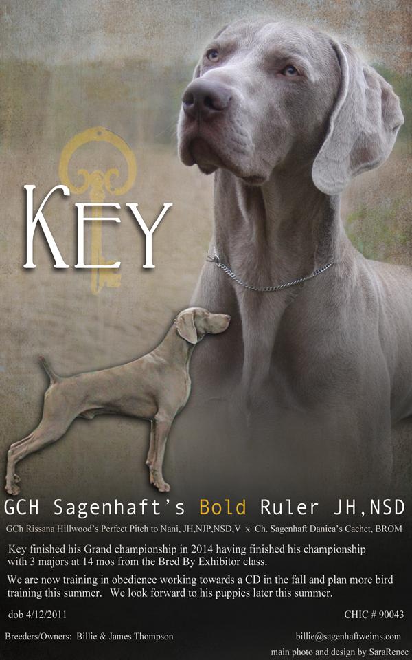 GCh Sagenhaft's Bold Ruler JH, CD, B, VKey