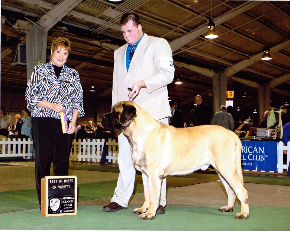 GCH CH Honor Way's Sir Chamberlain of Hess' Country